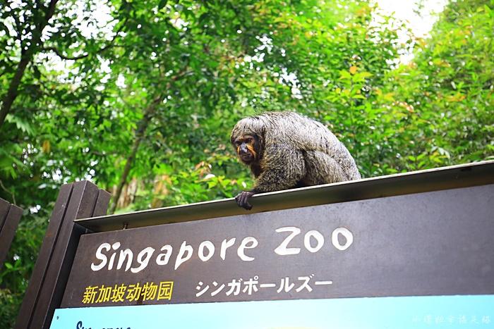 【新加坡動物園】日間動物園攻略,超推薦大象表演,還可餵大象! @小環妞 幸福足跡