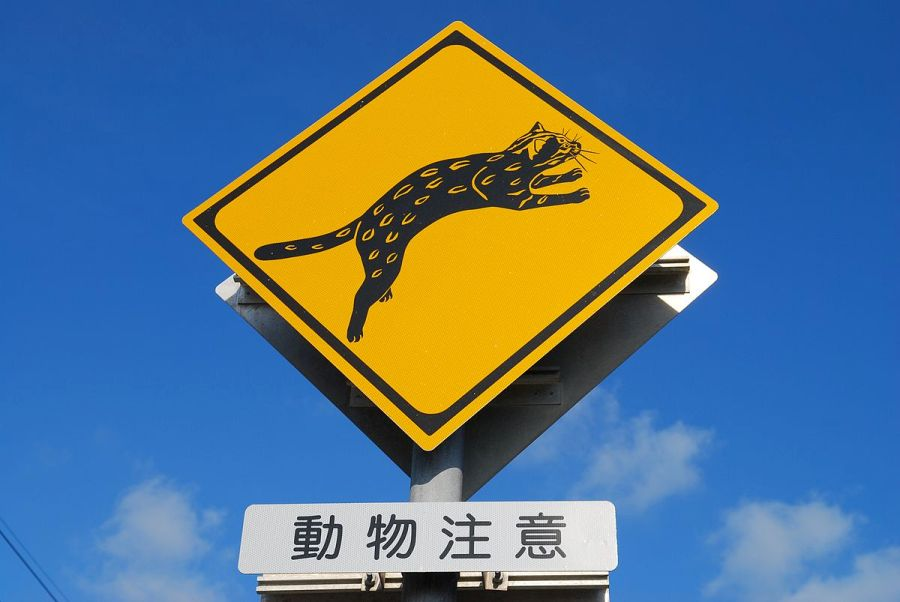 """""""Warning signs for Iriomote cat"""" by sota - Flickr. Licensed under CC BY-SA 2.0 via Commons - https://commons.wikimedia.org/wiki/File:Warning_signs_for_Iriomote_cat.jpg#/media/File:Warning_signs_for_Iriomote_cat.jpg"""