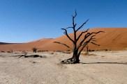 To akacje, niektóre z nich mają po kilkaset lat