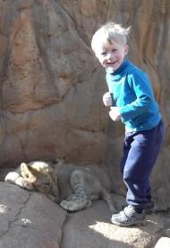 lion_park2