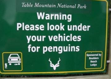 Na dodatek pingwiny włażą nie tam, gdzie trzeba...