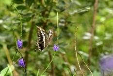 Motyl na krzaku przed domkiem