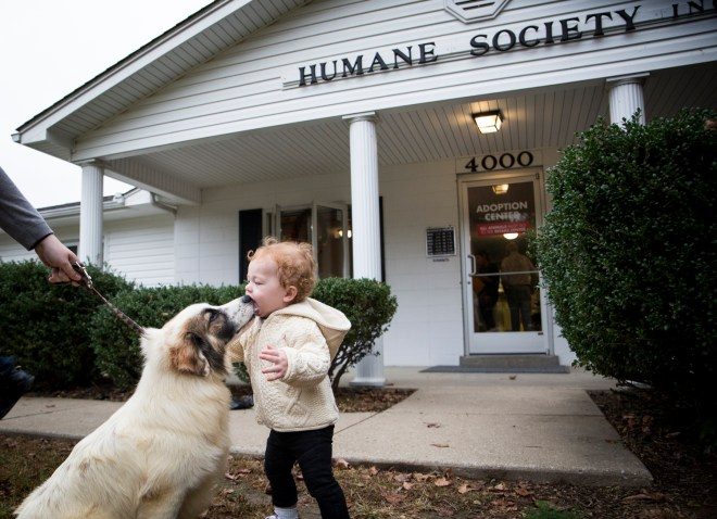 Hobo, a shetland sheepdog up for adoption at the McCracken County Humane Society, introduces himself to Coy Stalions.