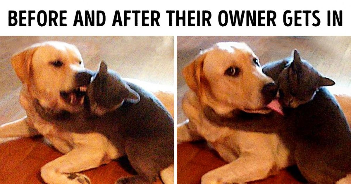 20 Funny Pics Of Cats And Dogs Living Together