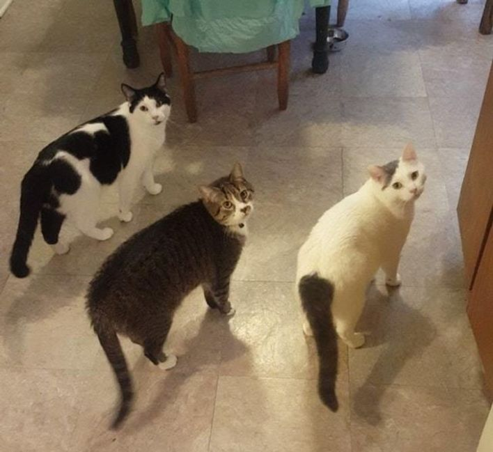 Tabby cats looking concerned after being found