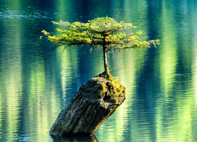 20 Photos That Prove Nature Has the Strongest Willpower