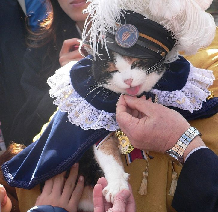 12 Very Famous Cats That Earned A Place In History For Their Charm