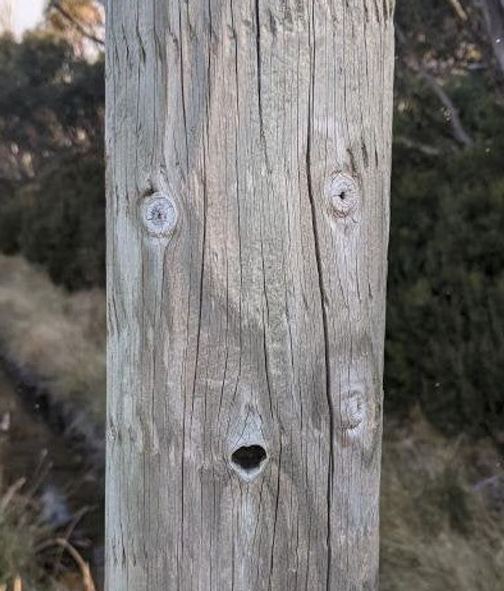 21 Photos That Prove We Can See Faces And Shapes Even Where There Are None