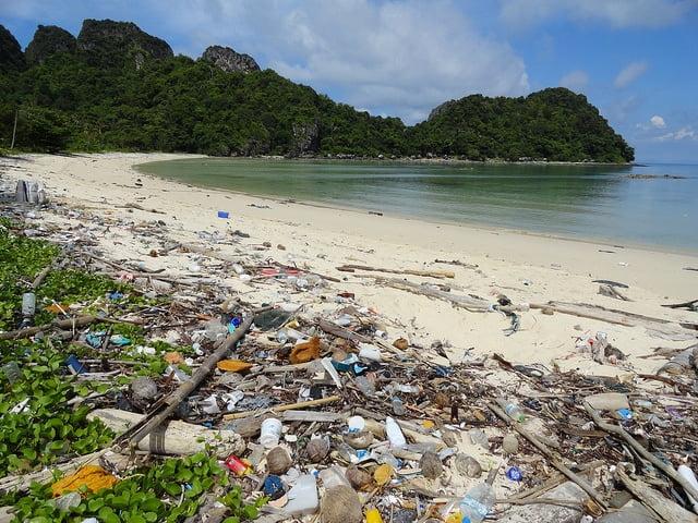 Odkryto pierwsze bakterie które jedzą plastik