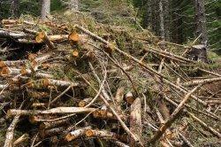 Biomasa - wlaczoszczedzanie.pl -Depositphotos / @ Oregon Department of Forestry / CC BY 2.0