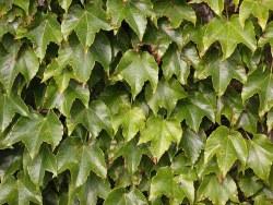 Rośliny doniczkowe oczyszczające powietrze w domu - wlaczoszczedzanie.pl - Flickr / @ Carl Lewis / CC BY 2.0