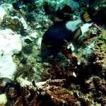 szkodzona rafa koralowa przy wyspie Kri w archipelagu Raja Ampat