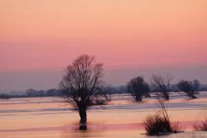 Prawie połowa obszaru Parku Narodowego Ujście Warty znalazła się pod wodą - wlaczoszczedzanie.pl - Flickr / @ Roman Filipkowski / CC BY 2.0