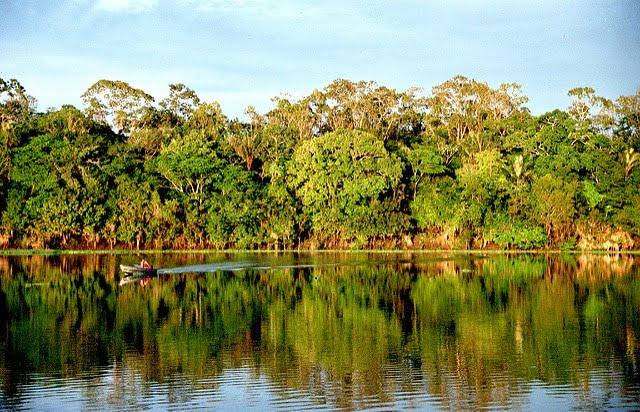 Firma Whirlpool w ramach projektu LifeGate staje w obronie lasów deszczowych Amazonii
