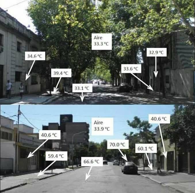 Drzewa ograniczają smog, obniżają temperaturę w miastach w czasie upałów, zmniejszają zużycie energii