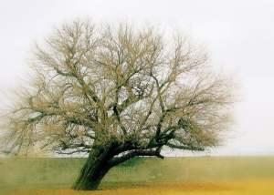 Drzewa i ich niezwykłe właściwości - wlaczoszczedzanie.pl - Flickr / @ Jan Tik / CC BY 2.0