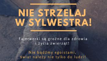 Kilka prostych porad jak pomóc zwierzętom przetrwać noc sylwestrową