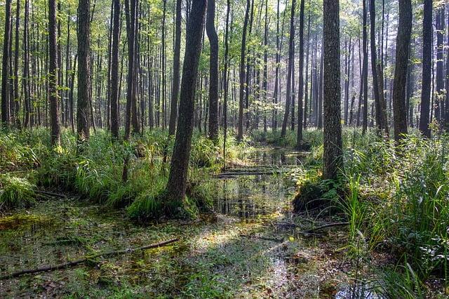 O objęcie całej polskiej części Puszczy Białowieskiej parkiem narodowym zaapelowało 140 polskich naukowców