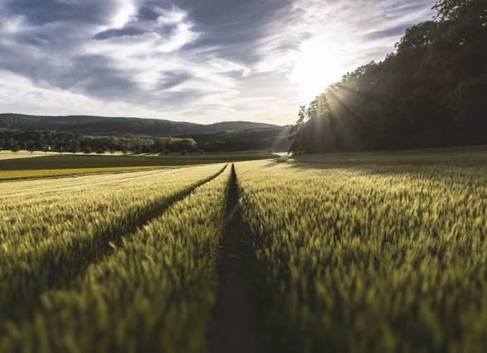 Przyszłością rolnictwa są trendy takie jak zero waste, nutrigenomika, alternatywne źródła białka czy miejskie ogrody