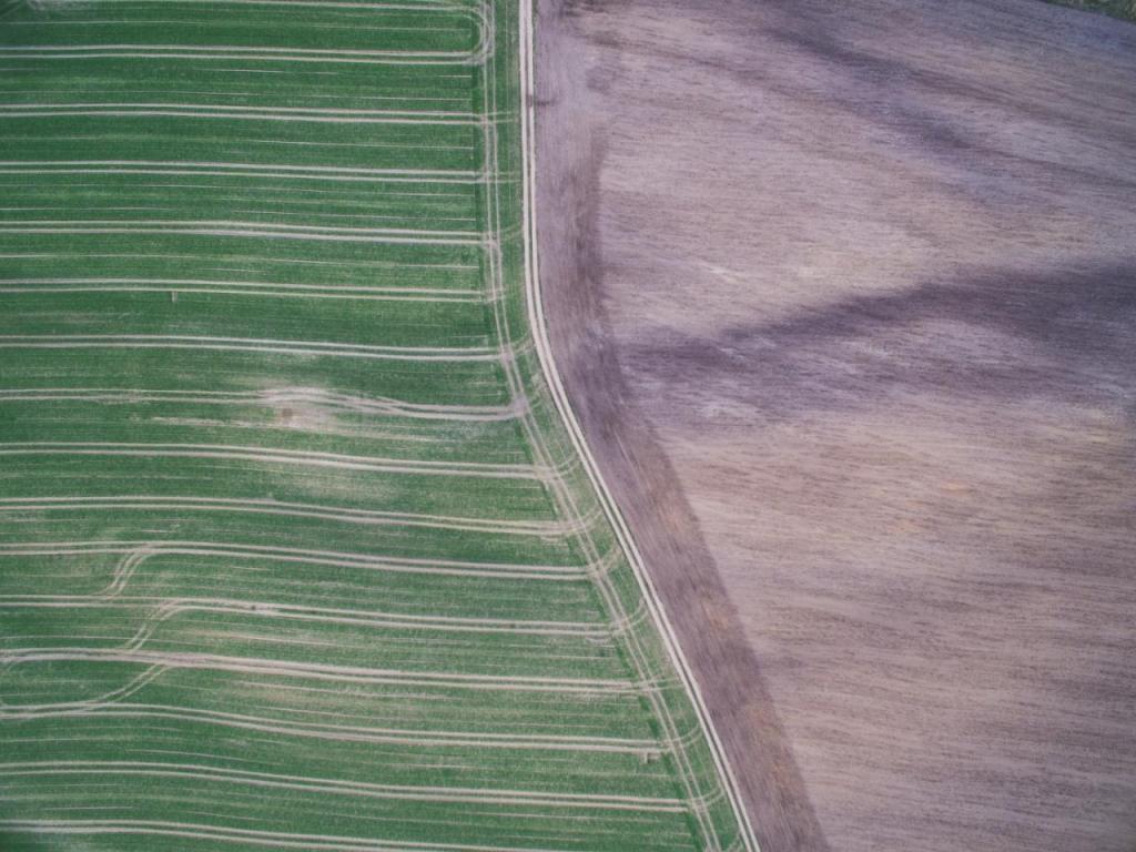 Ciepła jesień sprawiła że niektóre rośliny ponownie zaczęły cykl wegetacyjny, a to zły znak