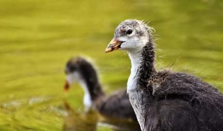 Według badań ptaki kolonizujące miasta pochodzą z terenów wokół nich