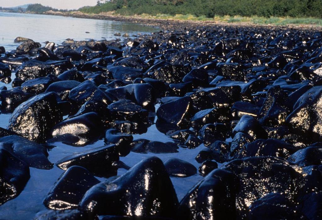 Tłusta, pokryta ropą plaża