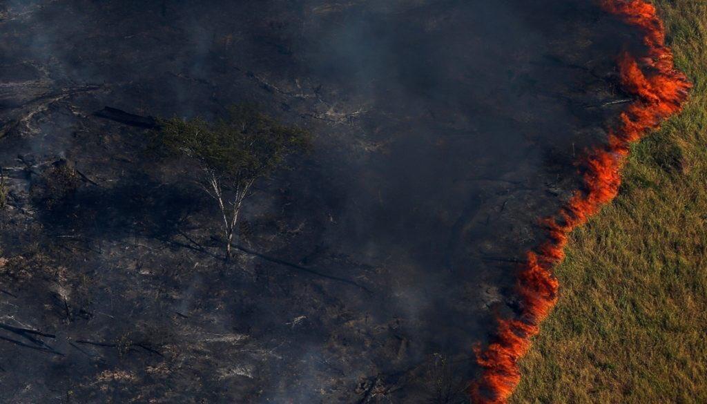 Płonące zielone płuca Ziemi
