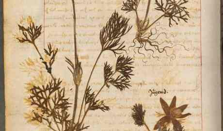 Uczelnie z Pomorza zdigitalizują i udostępnią on-line zbiory herbariów czyli zasuszonych, opisanych i sklasyfikowanych okazów roślin i grzybów