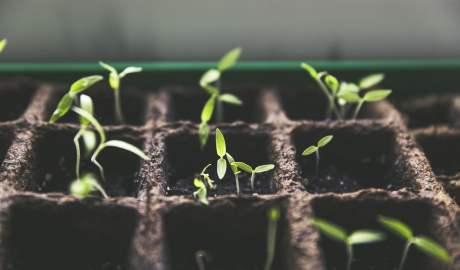 Na rynku pojawiają się nowe systemy hodowli roślin, zamienniki mięsa i technologie pozwalające ograniczać marnowanie żywności