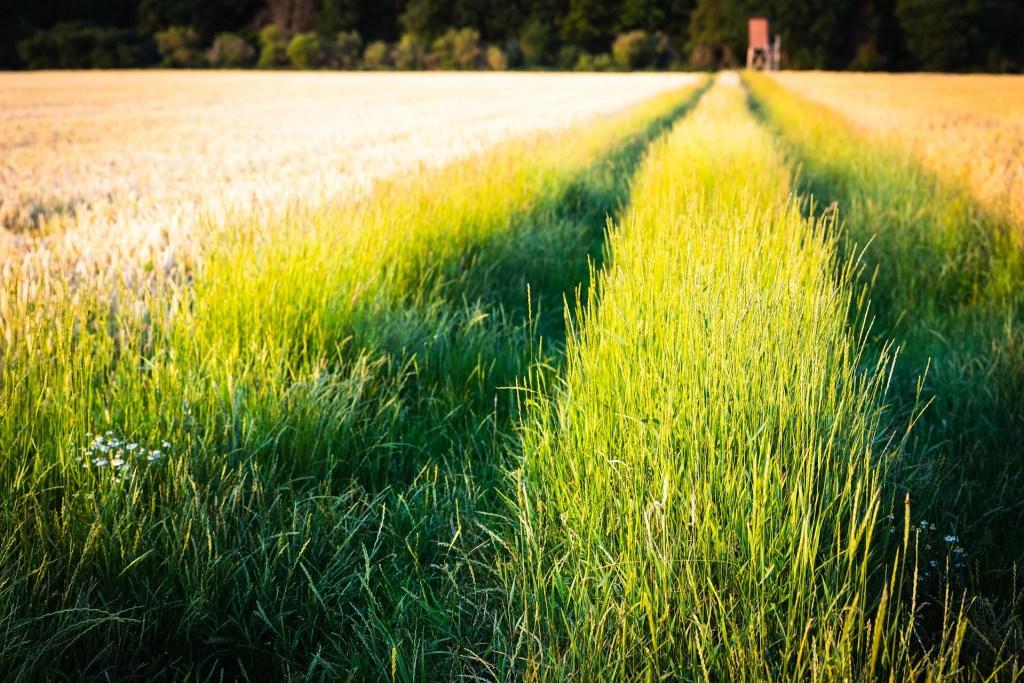 Europejscy rolnicy powinni do 2030 roku ograniczyć używanie pestycydów o połowę