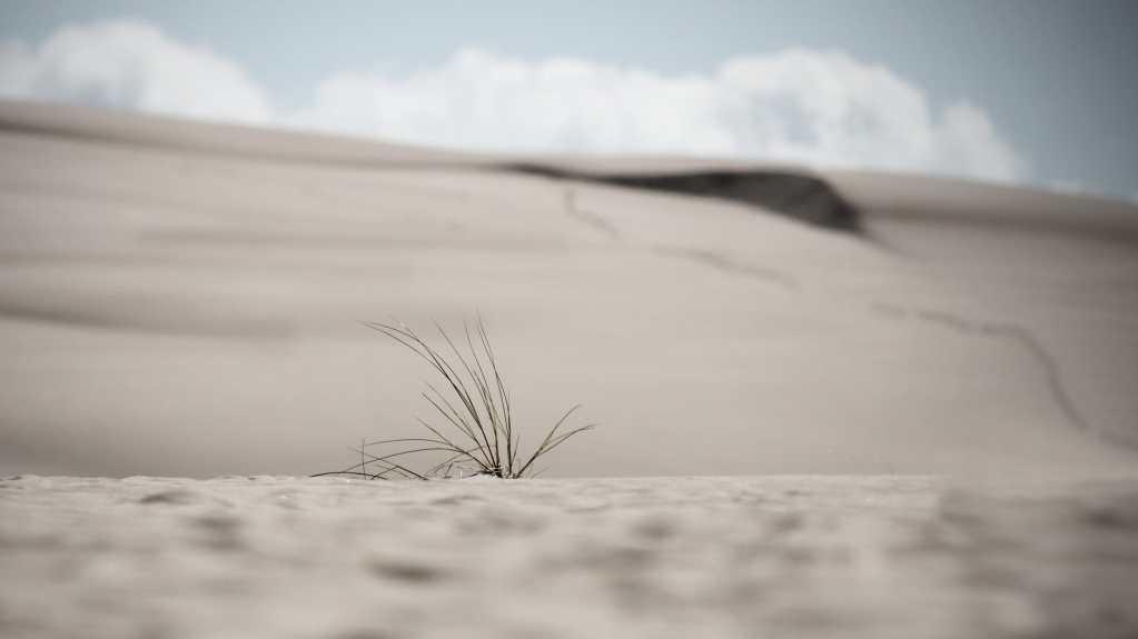 W środę 17 czerwca przypadł Światowy Dzień Walki z Pustynnieniem i Suszą