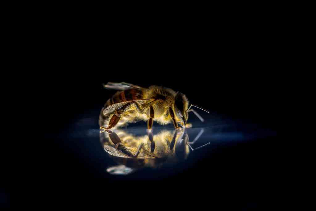 O czym bzyczą pszczoły w ulu? Naukowcy z Uniwersytetu Rolniczego w Krakowie tłumaczą pszczele sygnały