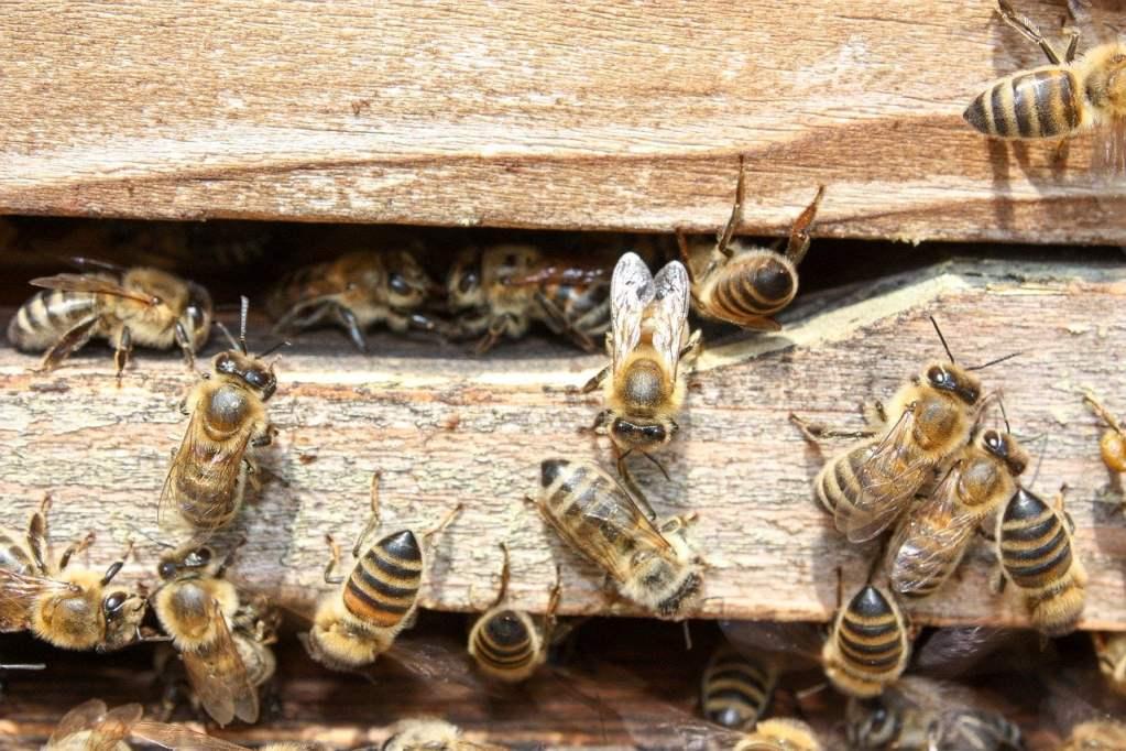 W Krakowie powstanie pasieka dla pszczół na dachu salonu samochodowego