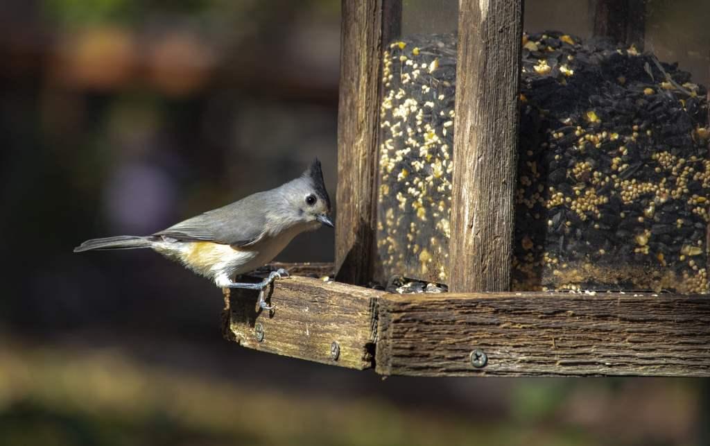 Podczas tegorocznej Akcji Karmnik w Białymstoku, zaobrączkowano prawie 560 ptaków