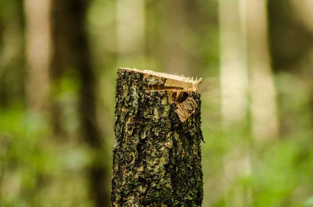 """Za sprawą działania """"Lex Szyszko"""" Łódź doświadczyła dużych strat w drzewostanie"""