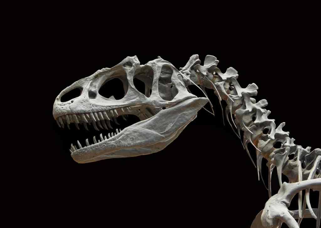 Odnajdywane w Polsce skamieniałości dinozaurów pozwolą przewidzieć zachowanie środowiska przy zmieniającym się klimacie