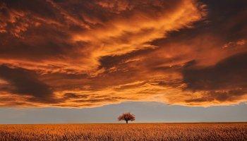Nie zawsze drzewo większe to drzewo bardziej plenne