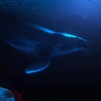 """神秘的な海中世界を巡る探索アドベンチャー「Beyond Blue」のトレイラーが公開。美しく、おどろおどろしい、リアルな""""海""""を描く。"""