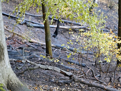 Pożar lasu w Pilchowicach