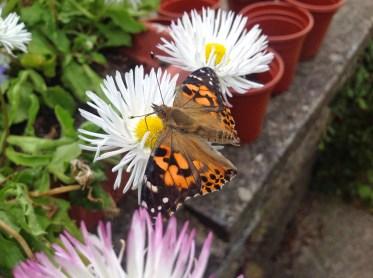 Butterfly Pi 3