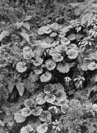 tumblr-giant-leaves