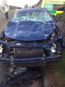 Car hits five cows in north Staffordshire