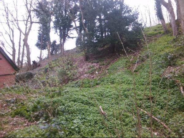 Car ends up down malvern hillside 1
