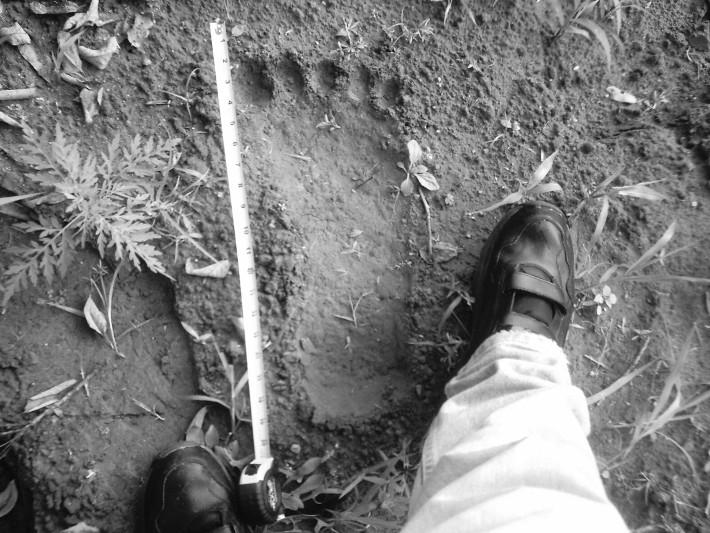 Certified carbon-free footprint.