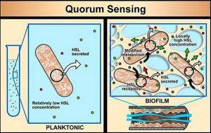 Diagram of Biofilm Quorum Sensing