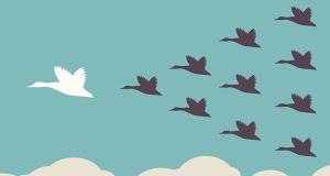 Leadership_Geese