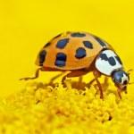 St. Wendeler Wingertschule baut Hotels für Insekten