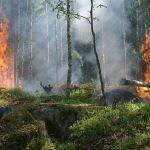Umweltminister Jost warnt vor Waldbrandgefahr im Saarland
