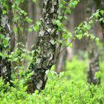 """""""Essbare Baumblätter, Wurzeln & Co."""" – Workshop mit Frischsaftherstellung im Naturpark-Dorf Theley"""
