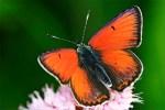 Tag der Artenvielfalt im Nationalpark